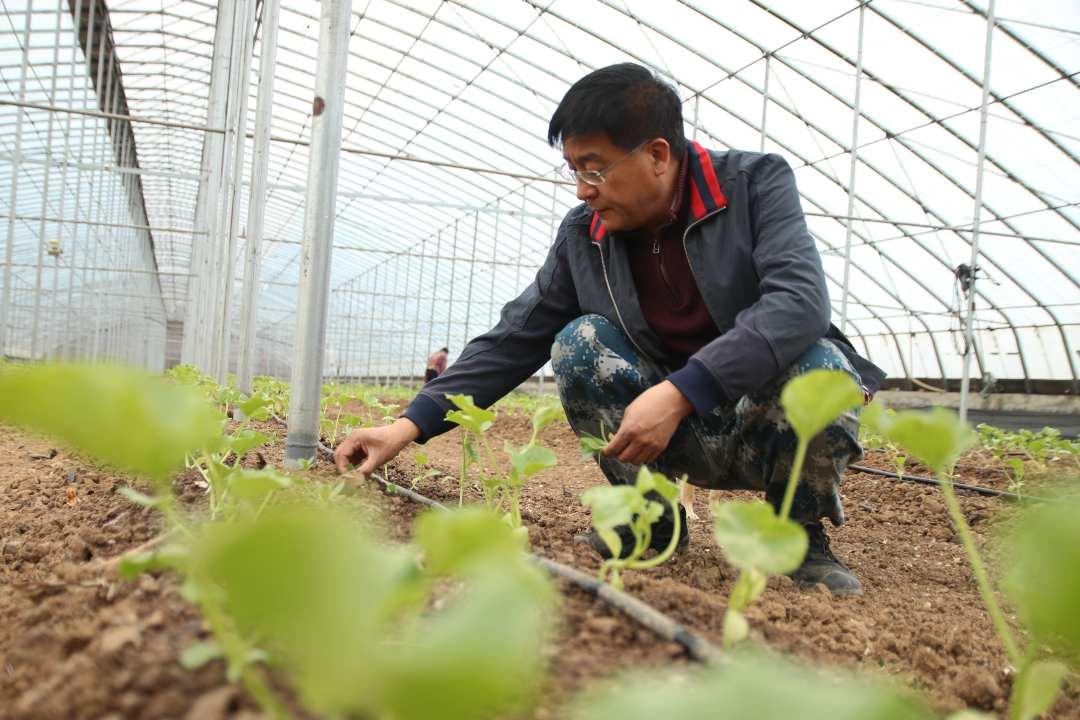 一位退役軍人的回鄉創業之路:菌瓜輪作產業示范基地