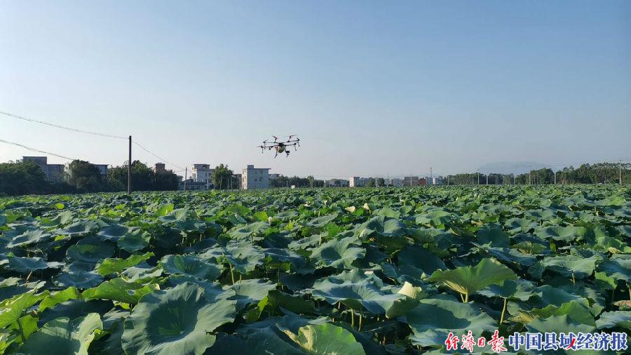 无人机在基地上空喷药