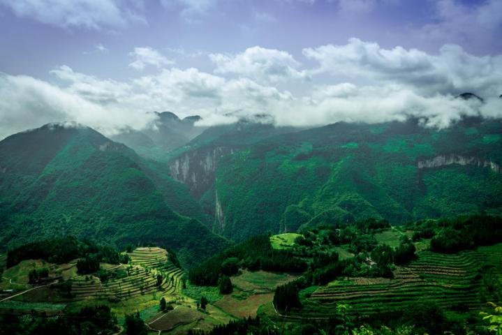 加强国家储备林建设 中林集团引领林业高质量发展