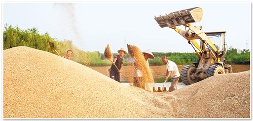 大地为证——中国40年农村土地制度改革纪略(二)